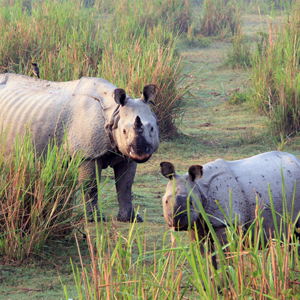 Into the wilderness at Kaziranga